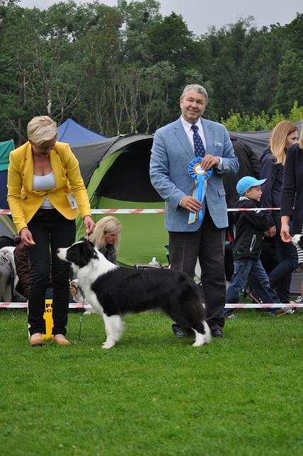 VIVA LA TIA breeding, sale, Border Collie puppies Forestry (Poland Pomorskie) Hodowla, sprzedaż, szczeniaki Border Collie